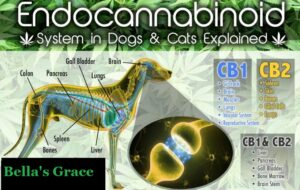 Health Benefits of CBD for Your Pets Health and Wellbeing 1
