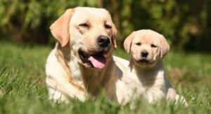 Health Benefits of CBD for Your Pets Health and Wellbeing 3